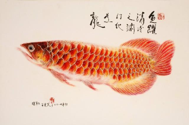 壁纸 动物 鱼 鱼类 640_424